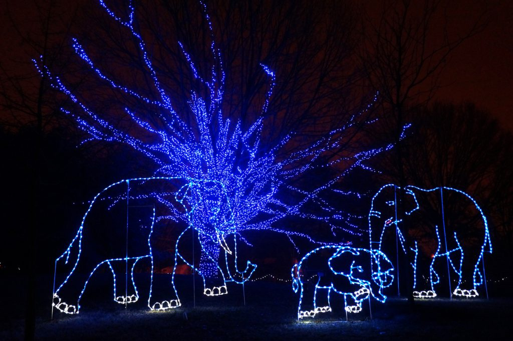 ZooLight Safari